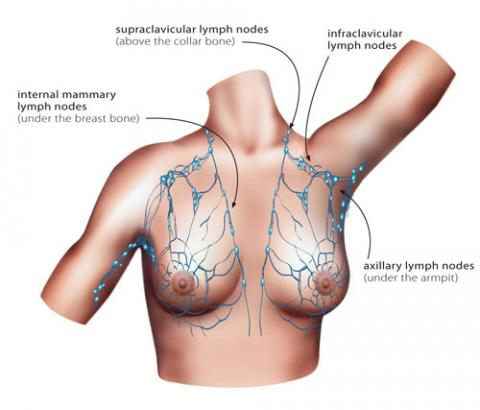 The Lymphatic System Cancer Australia